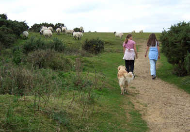 family-walking-on-common-jp-with-dog 392x272