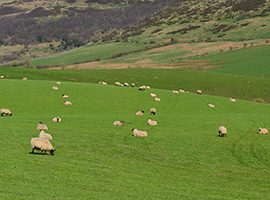 Farmer attitudes to environmental management – Defra publish CCRI report