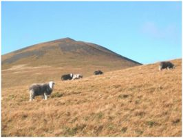 CCRI helping to protect Britain's upland