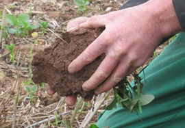 Matt Reed talks to Radio Gloucestershire about importance of soil