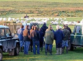 Exmoor Hill Farming Network produce post-Brexit statement