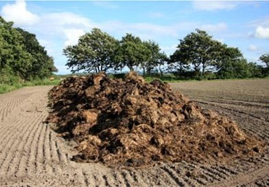 RECARE (Preventing and remediating degradation of soils in Europe through land care)