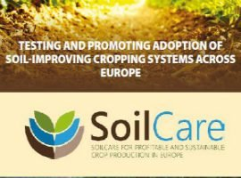 SoilCare – Testing cropping systems that improve soil and profitability