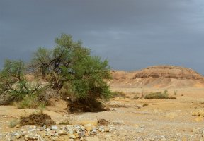 CCRI researchers to visit Arava Institute