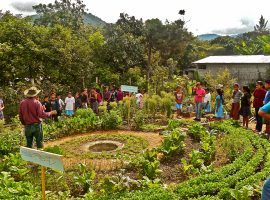 The social processes behind agroecological scaling in the Maya-Achi territory of Guatemala