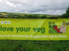 Veg box schemes vs Community Supported Agriculture in Covid-19: Who's more resilient, and does it even matter?