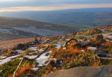 Economic analysis & project evaluation of the 'Molland Graze the Moor'