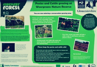 Foresters' Forest – Monitoring and Evaluation