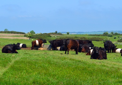 An adaptive decision-support tool for better grassland management by UK farmers