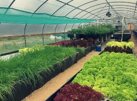 The Shiso trout aquaponics farm: A circular biowaste experiment in West Yorkshire